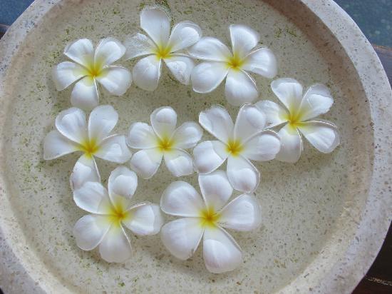 Club Med Bali: 美丽的鸡蛋花