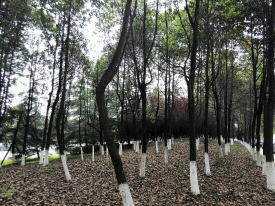 Nanyang, China: 人民公园里的参天大树
