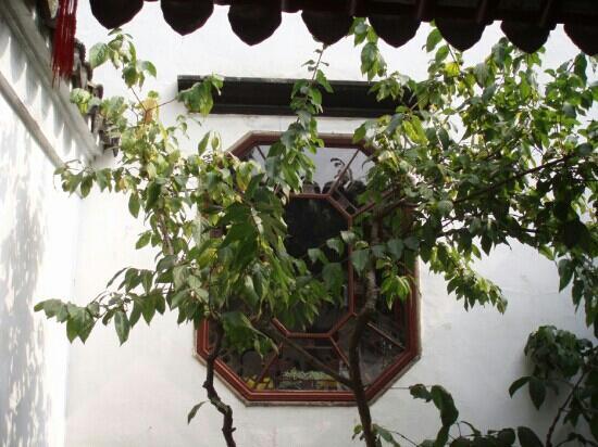 Suzhou Plum Garden: 梅园的夏天