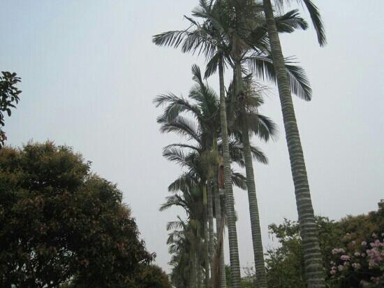 Xiamen Jinbang Park: 市中心里的公园