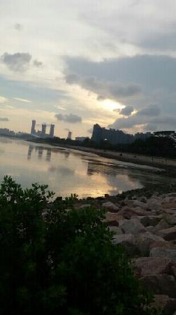 Shenzhen Mangrove Nature Reserve: 红树林