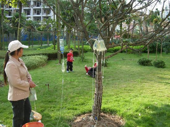 Xiamen Botanical Garden: 给植物治病
