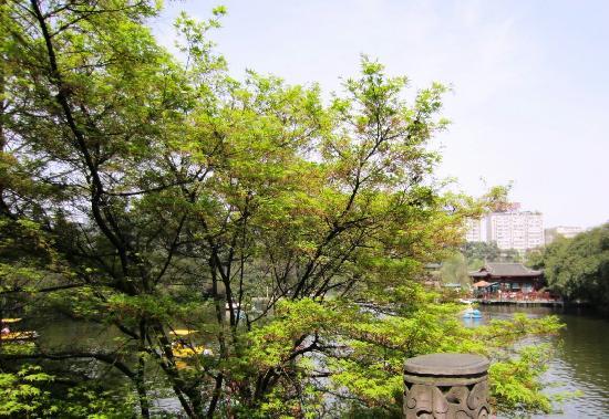 Kunming Botanical Garden: 有树有水的昆明植物园