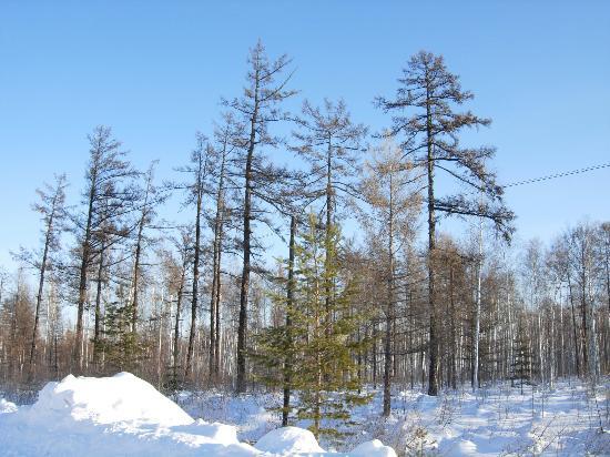 Beijicun Forest Park : 冬天的北极村森林公园