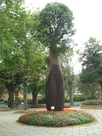 Chung Tai Chan Monastery : 中台禅寺里的树