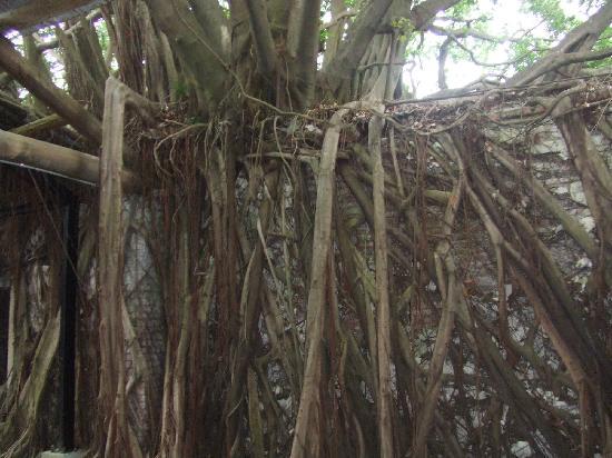 Maison arboricole d'Anping : 安平树屋