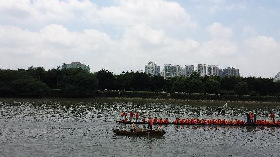 Zhujiang New Town: 端午节划龙舟
