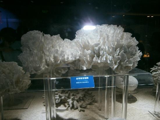Qingdao Underwater World: 大珊瑚是不是很壮观