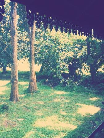 Kampung Tok Senik Resort Langkawi : 到处都是生气盎然