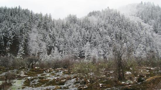Ganhaizi National Forest Park : 银装素裹的甘海子森林公园