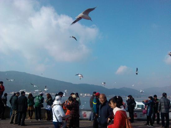 Dian Lake (Dian Chi) : 我爱冬天滇池的海鸥