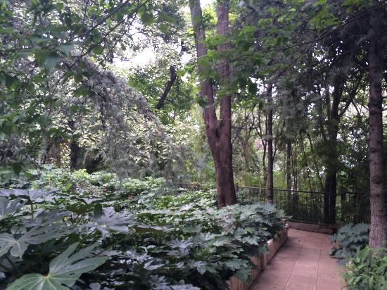 Kunming West Hill (Xishan Forest Park): 西山公园森林茂密