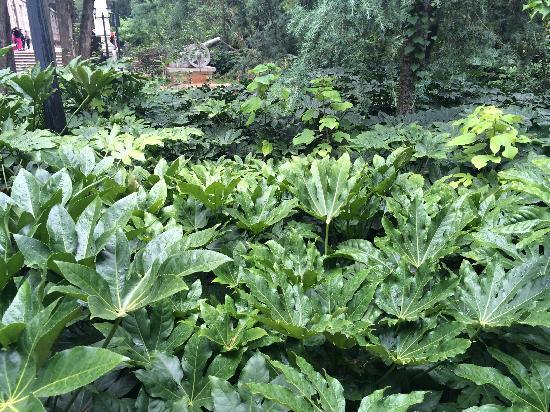 Kunming Botanical Garden: 植物园里植被丰富