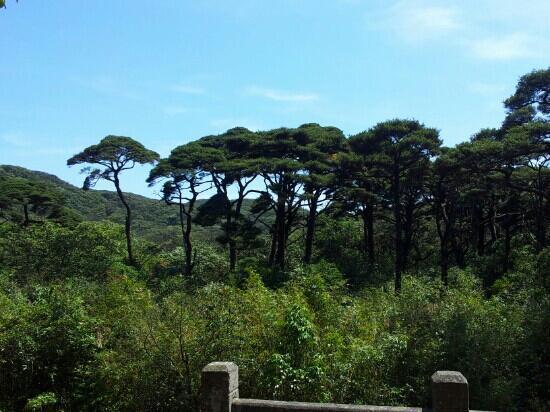 Guangxi Maoer Mountain Reserve : 兴安猫儿山铁松