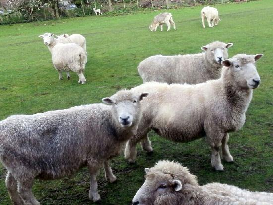 Agrodome: 爱歌顿农场