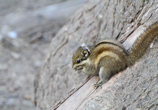Bitahai Nature Reserve: 碧塔海的小松鼠