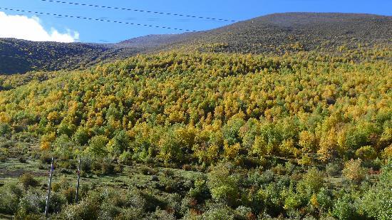 Lulang Forest: 秋日里的鲁朗林海