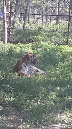 Qinghuang Island Wildlife park: 野生动物园