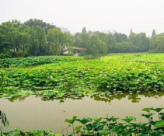 Zizhuyuan Gongyuan (Black Bamboo Park) : 1