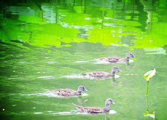 Zizhuyuan Gongyuan (Black Bamboo Park) : 2