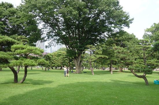 Kokyo Gaien National Garden: 舒适的大草坪