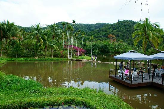 Yanuo Tropical Rain Forest Resort : 雅诺达风景