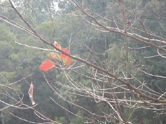 Mt. Shunfeng Park: 不知名的花