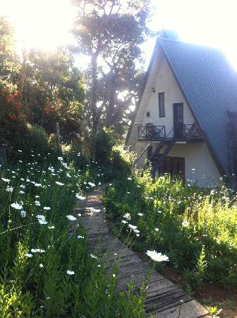 Sherwood Cottage: 小屋