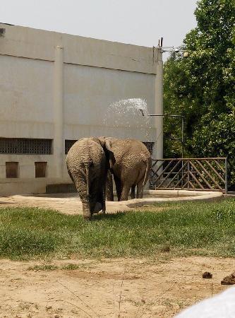 Beijing Zoo: 动物园