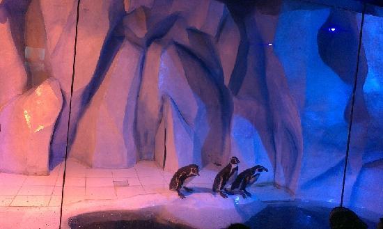 Royal Ocean World : 小企鹅要下水