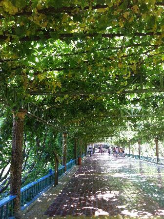 Grape Valley: 好甜的葡萄