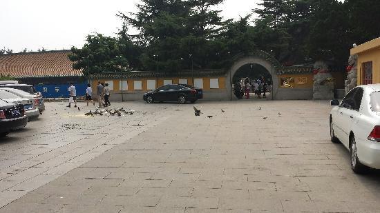 Zhanshan Temple: 门口,好多鸽子
