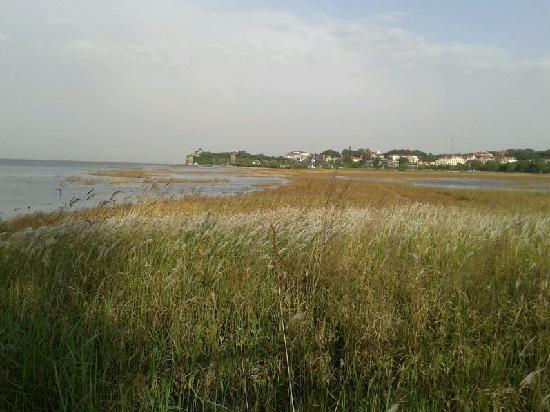 Beidaihe Summer Resort: 观鸟湿地