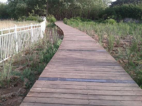 Beidaihe Summer Resort: 沿海栈道