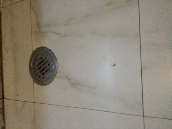 Regent Hotel: 卫生间的地面,