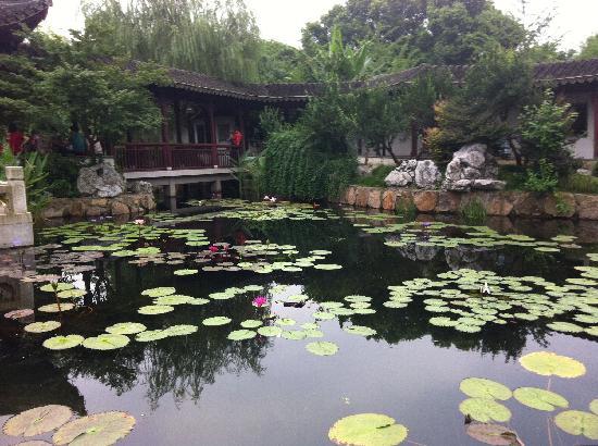 Guyi Garden: 一池睡莲