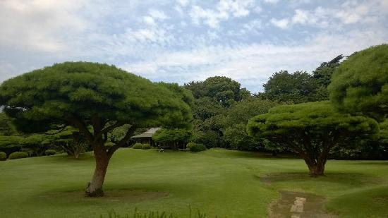Shinjuku Gyoen National Garden: 御苑各处都有草地。