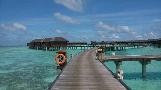 Olhuveli Beach & Spa Maldives : 美翻了的水屋