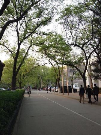 Peking University (Beijing Da Xue): 北大校园绿树成荫