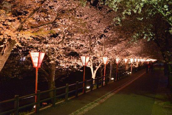Onaka Park