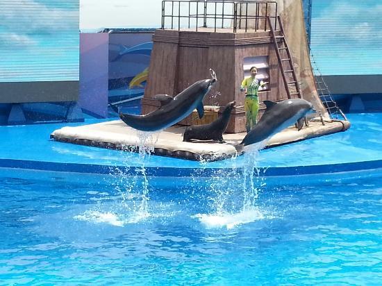 Ocean Park: 海豚表演