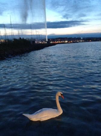 Lac Léman (Lac de Genève) : 夜色