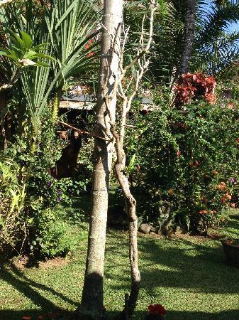 Ubud Inn : 很简单的客栈,也有热带园林景观