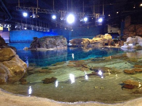 Ocean Park: 海洋馆