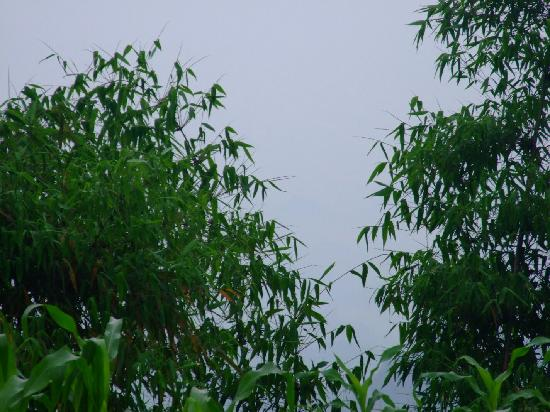 Changning Bamboo Forest Natural Reserve: 郁郁葱葱的竹子