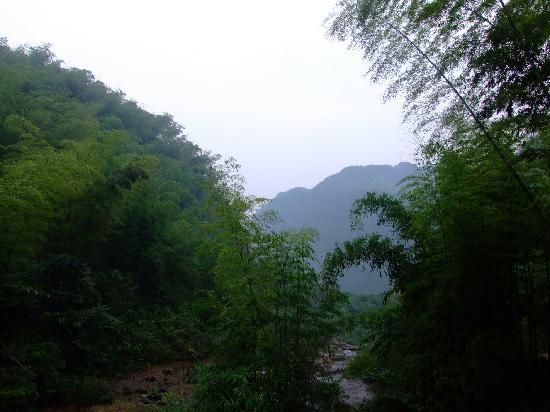 Anji County, China: 荷花山的竹子也很多