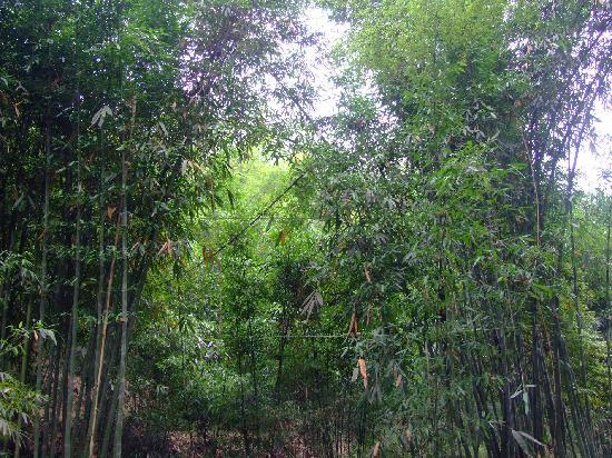 Yixing Zhuhai : 到处都是翠竹