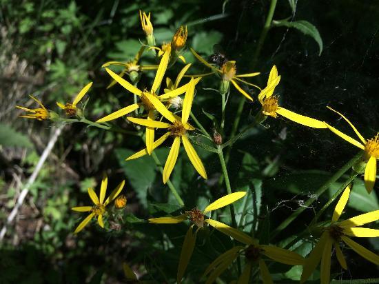 Urumqi Botanical Garden: 可爱的小黄花