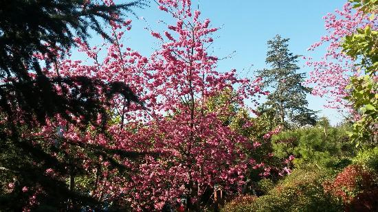 Taohua Scenic Resort: 繁盛的桃花