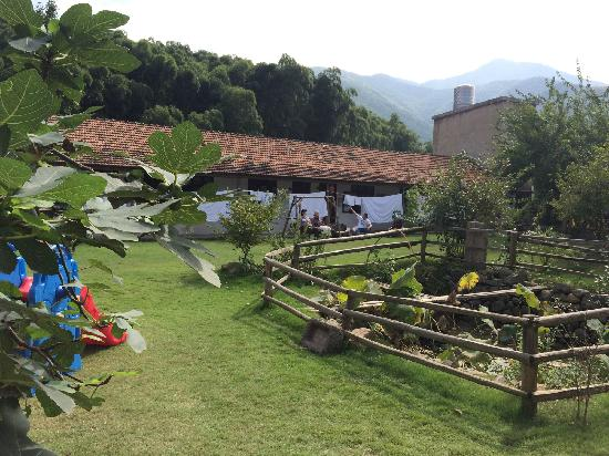 Naturalhome Hotel Moganshan Deqing : 小院一角